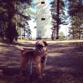 IG Travel Thursday: Koira matkassa