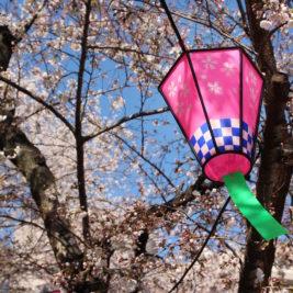 Kevätpiknik japanilaisittain – hanami