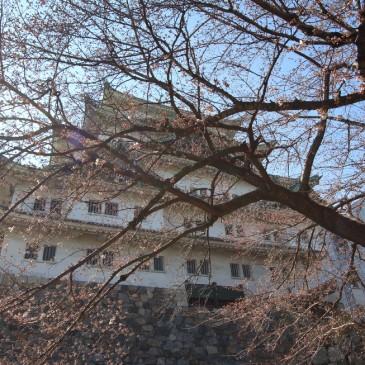 Kevättä Nagoyassa